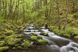 View of Gorton Creek  Columbia River Gorge  Oregon  USA