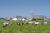 Town View with Cattle  Les Gougins  Normandy  France