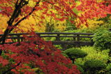Moon Bridge in Autumn  Portland Japanese Garden  Portland  Oregon  USA