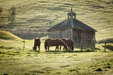 Horses and Old Barn  Olema  California  USA