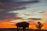 Bison Bull Silhouette, Theodore Roosevelt NP, North Dakota, USA Papier Photo par Chuck Haney