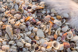 Incoming Surf and Seashells on Sanibel Island  Florida  USA