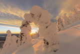 Snow Ghosts in the Whitefish Range  Montana  USA