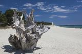 Town Beach Driftwood  Ghisonaccia  Costa Derena  Corsica  France