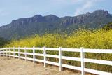 Yerba Buena Road  Santa Monica Mountains  California  USA