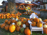Autumn Display of Pumpkins New England  Maine  USA
