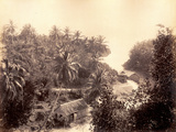 Priestman's River  Jamaica  1891