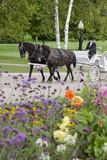 Traditional Horse and Carriage  Mackinac Island  Michigan  USA