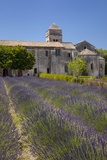 Lavender Below Saint Paul De-Mausole  Saint Remy-De-Provence  France
