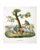 Rug Weavers  1827-35