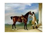 Miss Villebois' Bay Hunter Held by a Groom  1834