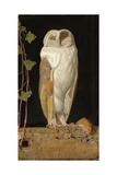 The White Owl: 'Alone and Warming His Five Wits  the White Owl in the Belfry Sits'  1856