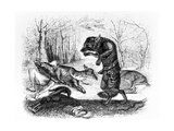 The Wolf and the Hunter  Illustration for 'Fables' of La Fontaine  Published by H Fournier Aine …