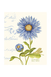 September Blue Aster