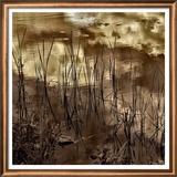 Infrared Pond 6