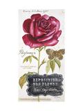 Parisian Rose