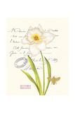 December Narcissus