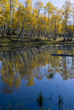 Mud Lake and Fall Color Aspen  Sevier Plateau  Utah  USA