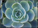 Close-Up of a Succulent Plant