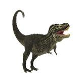 Tyrannosaurus Rex  a Large Predatory Beast of the Cretaceous Period