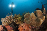 Diver Illuminates Mushroom Leather Coral and Crinoid with Twin Lamps