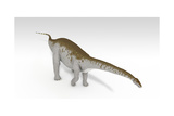 Apatosaurus Dinosaur  White Background