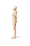 Female Standing  with Skeletal Bones Superimposed  Side View