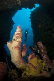 A Diver Looks into a Cavern at a Sponge  Gorontalo  Sulawesi  Indonesia