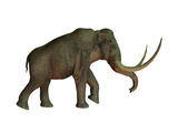 The Columbian Mammoth  an Extinct Species of Elephant