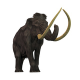 The Woolly Mammoth