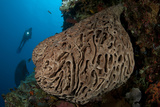 The Salvador Dali Sponge with Intricate Swirling Surface Pattern  Indonesia