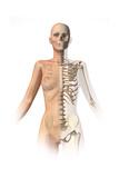 Female Body with Bone Skeleton Superimposed