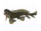 Xenacanthus  a Devonian Freshwater Shark