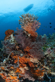 Colorful Crinoids and Soft Corals Adorn a Reef in Raja Ampat