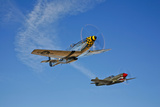 A P-51D Mustang Kimberly Kaye and a P-40E Warhawk in Flight