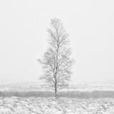 Winter Softness 2