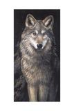 Blue Owl - Wolf