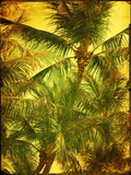 Palm Series I