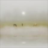 Horses Through the Mists
