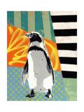 Humbold Penguin
