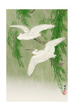 Two Egrets and Willow Tree