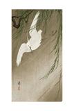 Egret in Storm