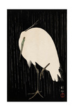 White Heron Standing in the Rain