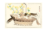 Kyosai Rakuga - Catfish