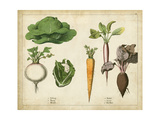 Kitchen Vegetables and Roots I