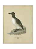 Antique Penguin II