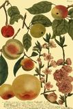 Weinmann Fruits II