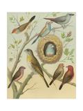 Birdwatcher's Delight I