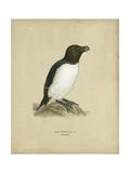 Antique Penguin I