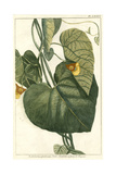Botanical by Buchoz I